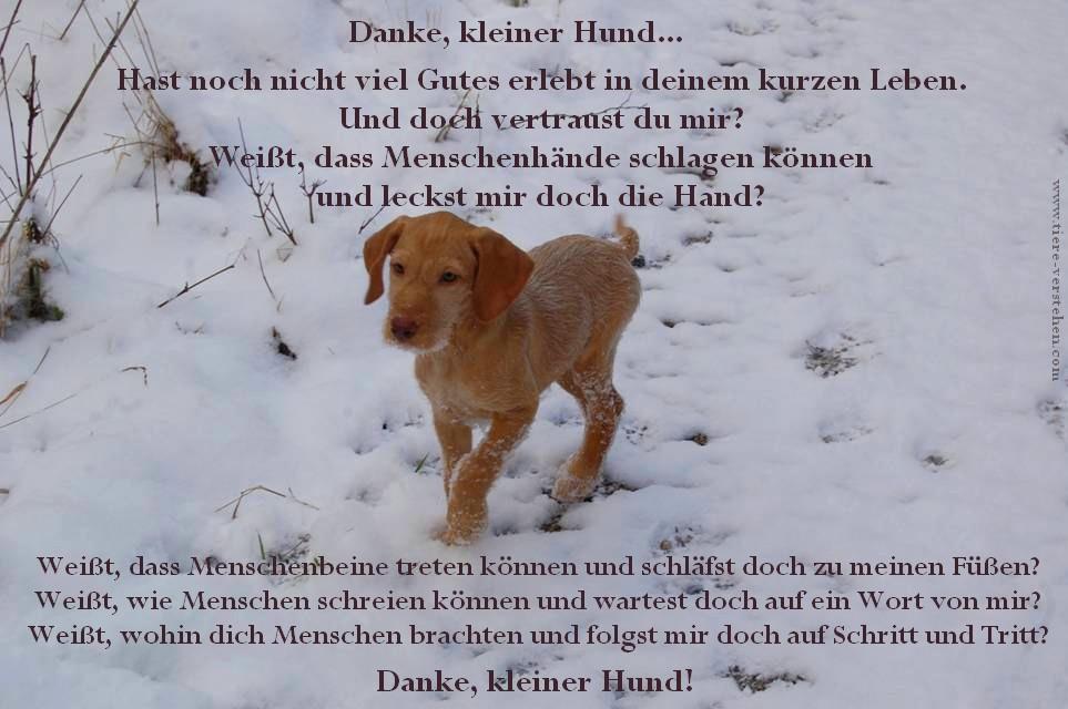Danke Kleiner Hund Tiere Verstehencom Tierkommunikation