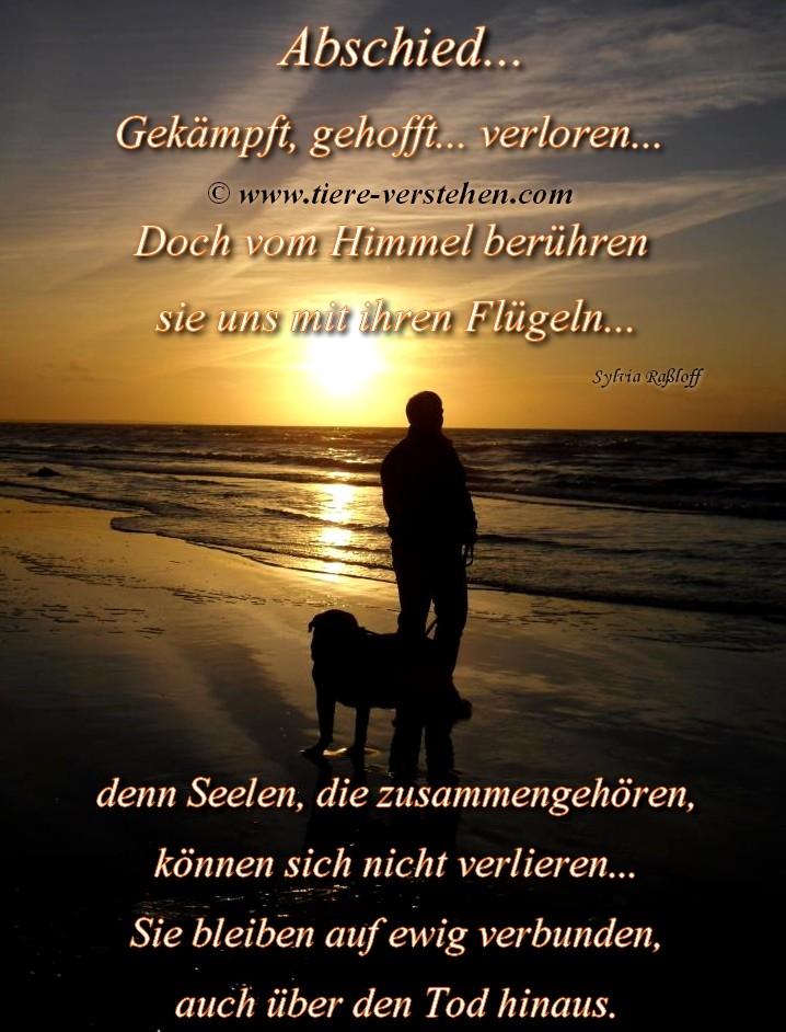 Abschied - Tiere-Verstehen.com - Tierkommunikation