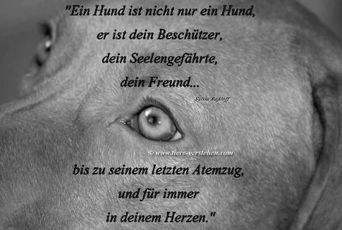 Ein Hund ist nicht nur ein Hund