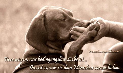 Tiere wissen was bedingungslose Liebe ist