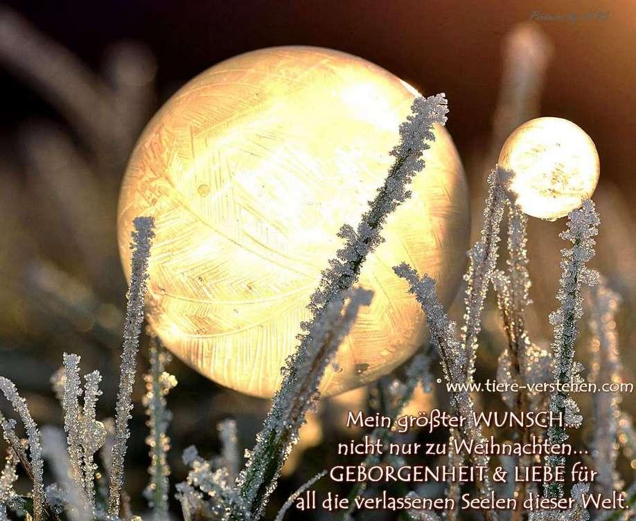 Mein größter Wunsch… nicht nur zu Weihnachten… – Tiere-Verstehen.com ...