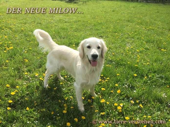 Der Neue Milow Wow Tiere Verstehencom
