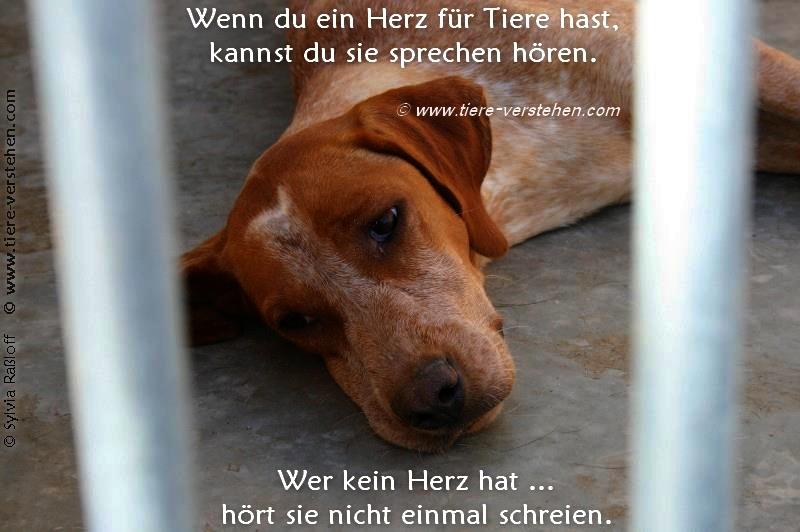 Schön Wenn du ein Herz für Tiere hast… – Tiere-Verstehen.com  DD33