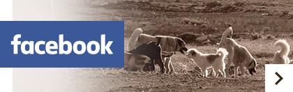 Tiere-Verstehen.com auf Facebook